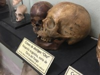 https://fernandohierro.com/files/gimgs/th-44_anatomias posibles calavera web pueblo originario.jpg